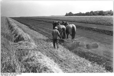 Horse-drawn roller.  (Photo source: Wikemedia Commons, German Federal Archives)