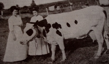 Image result for dairy cows a hundred years ago