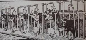 Source: Kimball's Dairy Farmer Magazine (April 1, 1913)