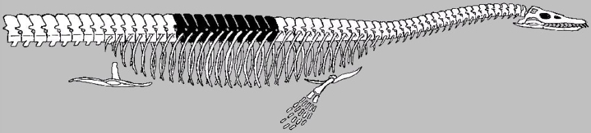 Cope's Dinosaur that March claimed had the head on the wrong end. (Source: Wikipedia)