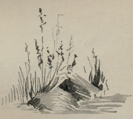 Fig. II