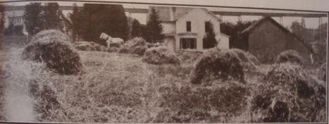 1913 Hay Field