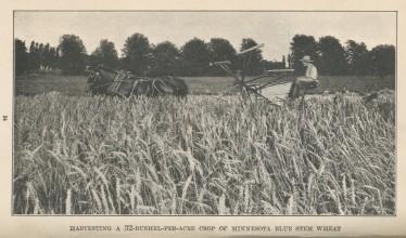 wheat.harvest