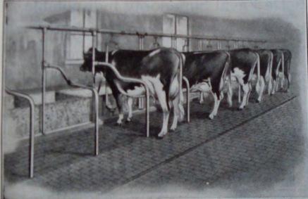 Kimball's Dairy Farmer Magazine (March 1, 1914)