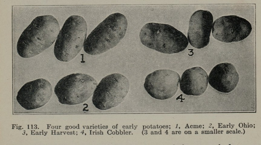 Early Potato Varieties