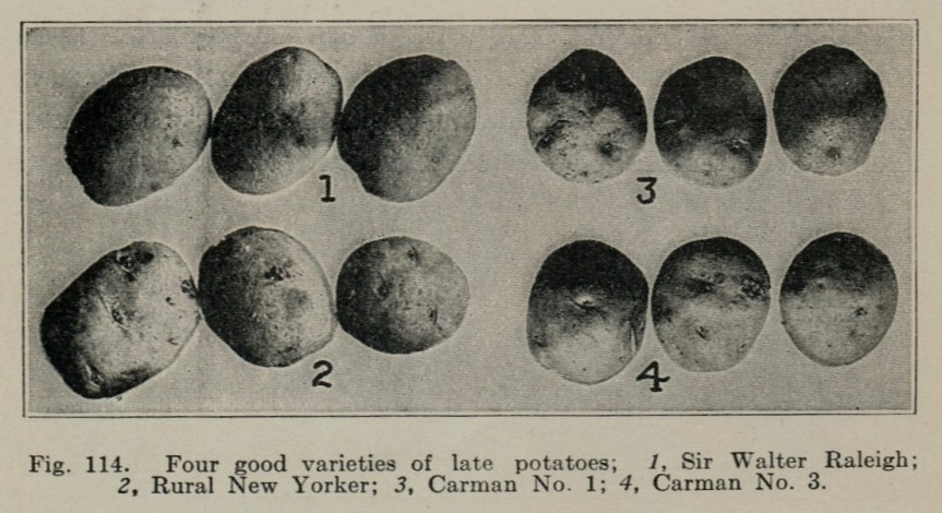 Late Potato Varieties a Hundred Years Ago--Source: Vegetable Gardening (1914)