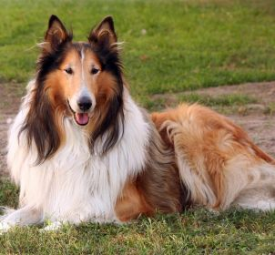 Source: Dog Breeds-Find the Best