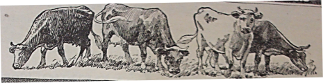 Source: Kimball's Dairy Farmer Magazine (1911)