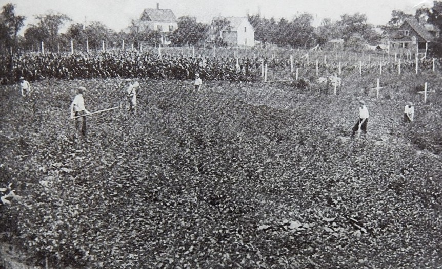 Photo caption: The first year the garden was all corn and potatoes.
