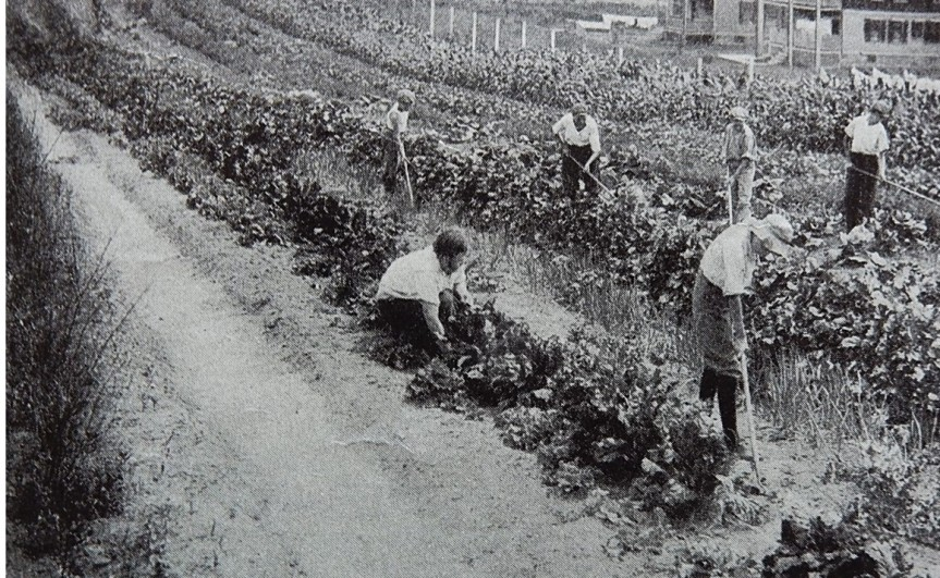 Photo Caption: The second years they grew all the common and some of the uncommon vegetables.