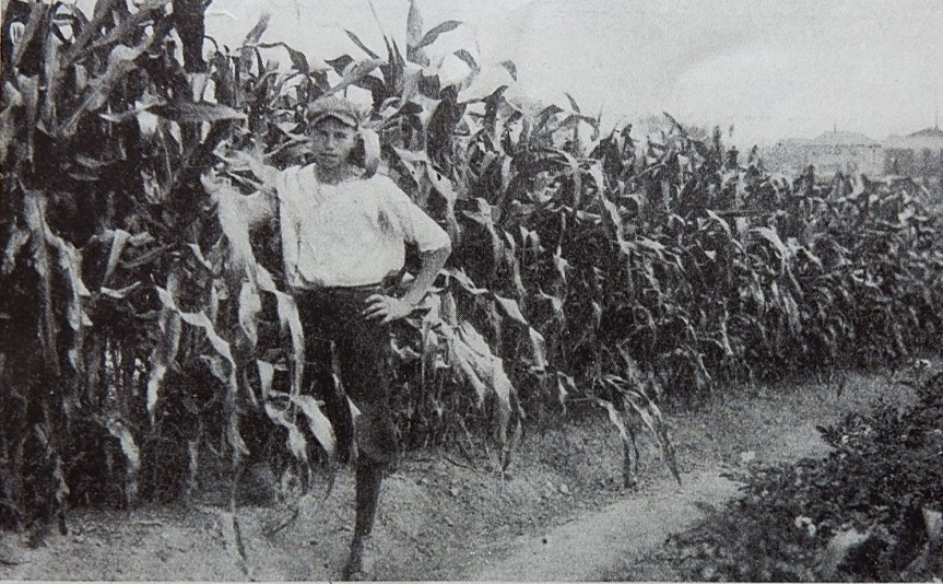 Caption: Gardening included training in salesmanship. Corn was sold by the foot.